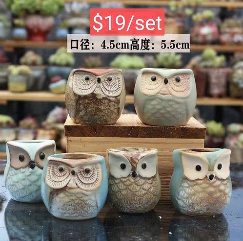 Small Cute Owls Succulent Pots Selections 6pcs 5.5cm height