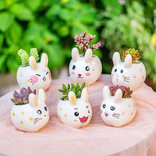 Selection of 6pcs Cacti Succulent Pottery Ceramic Flower Plant pots Rabbit Bunny