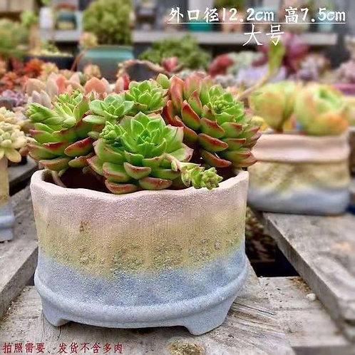 Medium size Ceramic Succulent Flower pots Matt Pink / Blue width 12.2cm