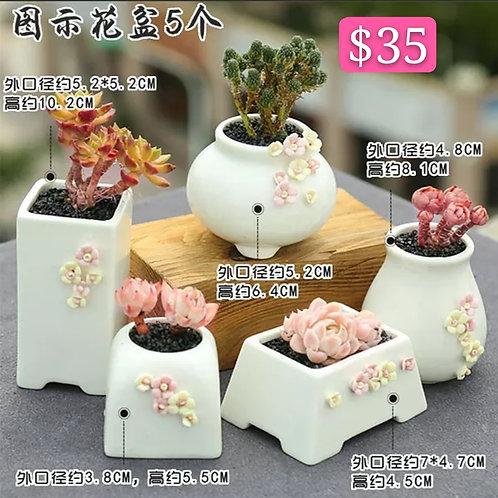 Multi Shape Selection of 5 Succulents/Cactus Pots White 7-10cm Height