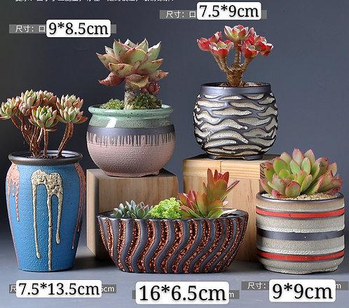 Selection of 5 Cactus Succulents Pots Ceramic Multi-color