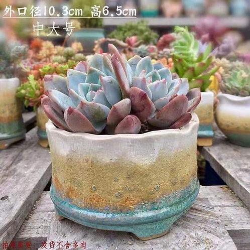 Medium size Ceramic Succulent Flower pots Matt Green / White width 10.3cm