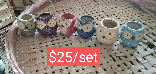 Cute Owls Succulent Pots Selections 6pcs 6.5cm height