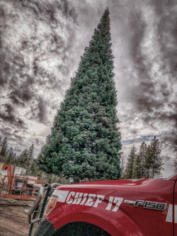 Inspecting Christmas Tree bound for T-=Mobile Arena in Las Vegas