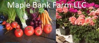 maple bank farm.JPG