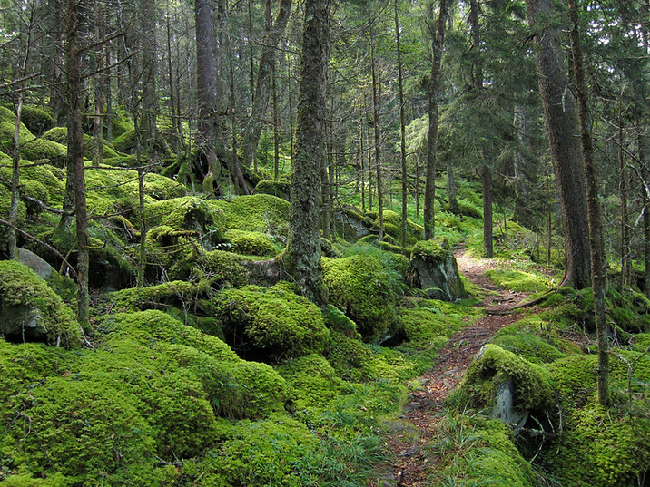 forest bathing path