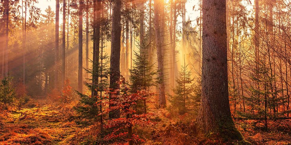Forest Bathing Walk - Westwood Hills