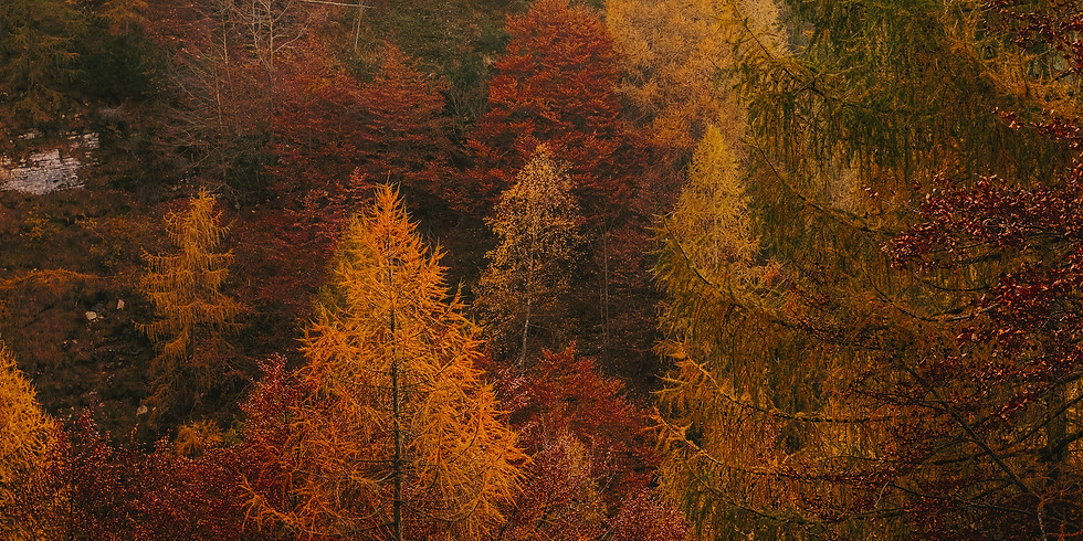 Forest Bathing Fall Series