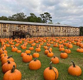 calies pumpkin patch.jpg