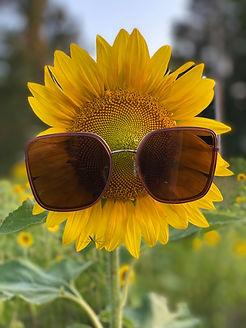 Cool Sunflower.jpg