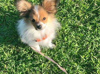 Momo puppy outdoor_edited.jpg