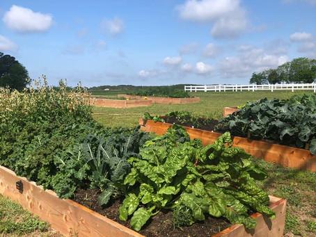 10 Tips for Planning Your Kitchen Garden