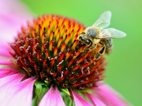 5 Ways To Encourage Insects Into Your Garden
