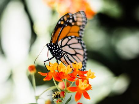 Attracting Butterflies To The Garden