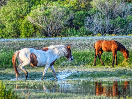 7 Reasons Chincoteague VA Is A Little Piece Of Heaven