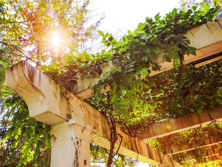 How to Use Vines in Your Garden