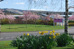 A Peaceful Location in Peebles