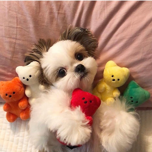 Gummybear Dog Toy
