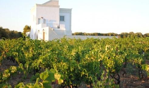 Primitivo Old Vines 2016