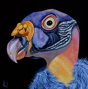 King Vulture 20_ x 20_