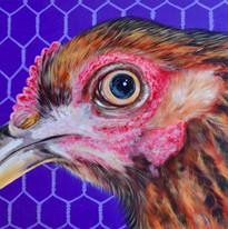 Chicken O'Sullivan 24_ x 36_.jpg