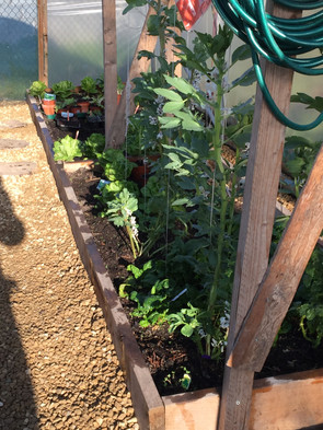 Garden.polytunnel.1.jpg