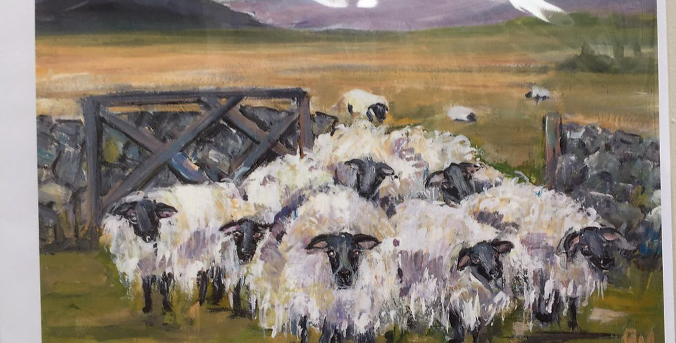 Sheep at the Gate Greeting Cards