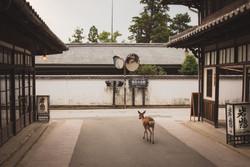 Itsukushima Temple, Hiroshima