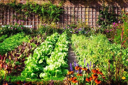 veggie garden.jpeg