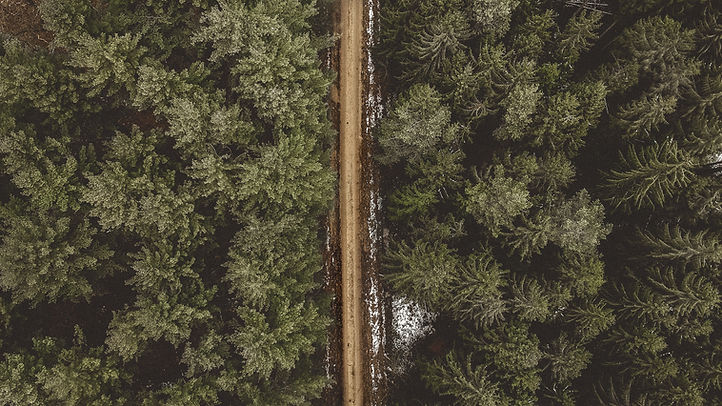 aerial-shot-background-conifer-757170.jp
