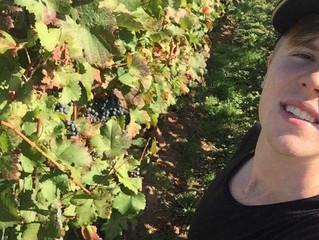 Herbst 2016 - die Weinlese! #myfirstharvest