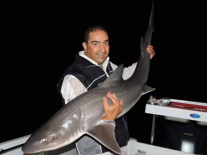 Shark time on Port Phillip Bay
