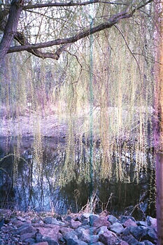 Fox Forest.jpg