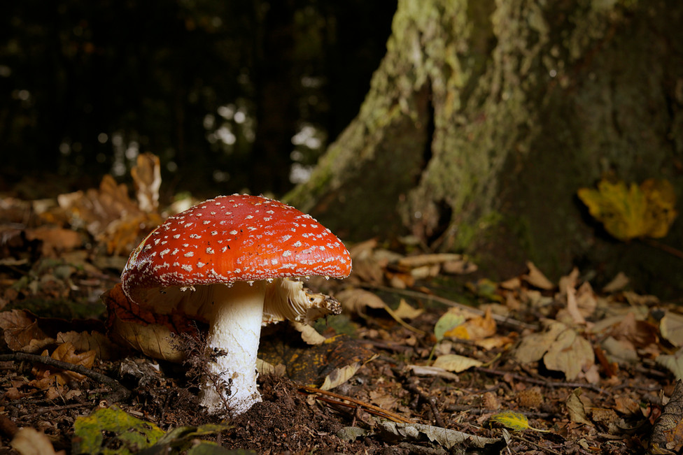 Archetypal Fungus III