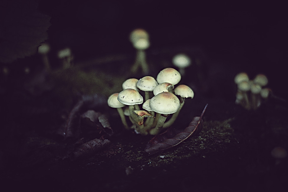 Gloomy Fungus