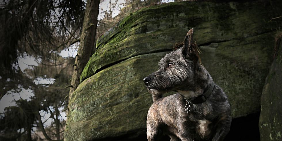 Charity Dog-Friendly Photo Walk