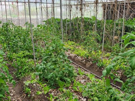 農作與自然共生-眉溪部落綠生農場