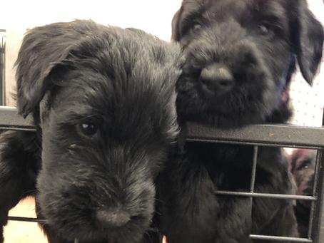 12/30/20 - Puppies
