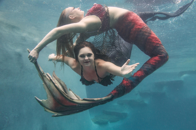 Synchronized Swim Shows