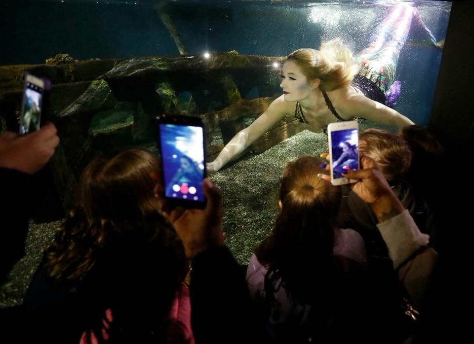 Aquarium Shows