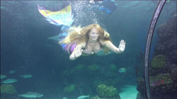 Experienced and Certified Aquarium Mermaids from the Circus Siren Pod