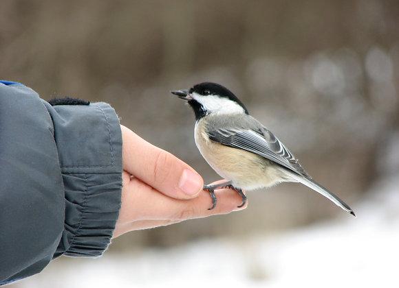 """Early Bird Hike"" Program"