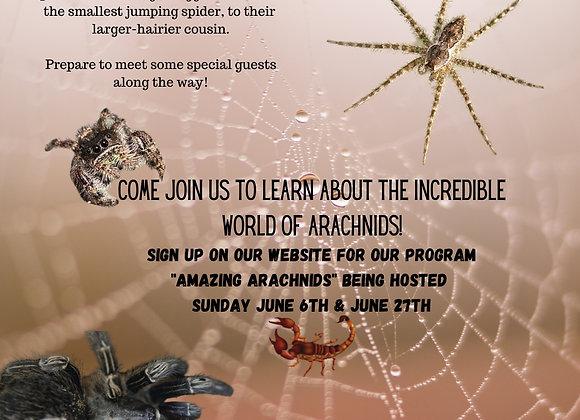 Arachnids Program