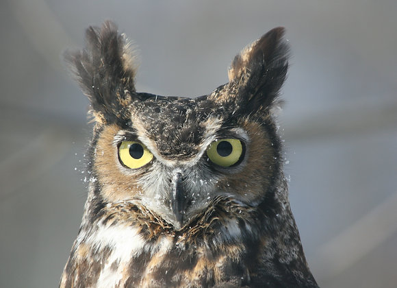 Owl about October Camp