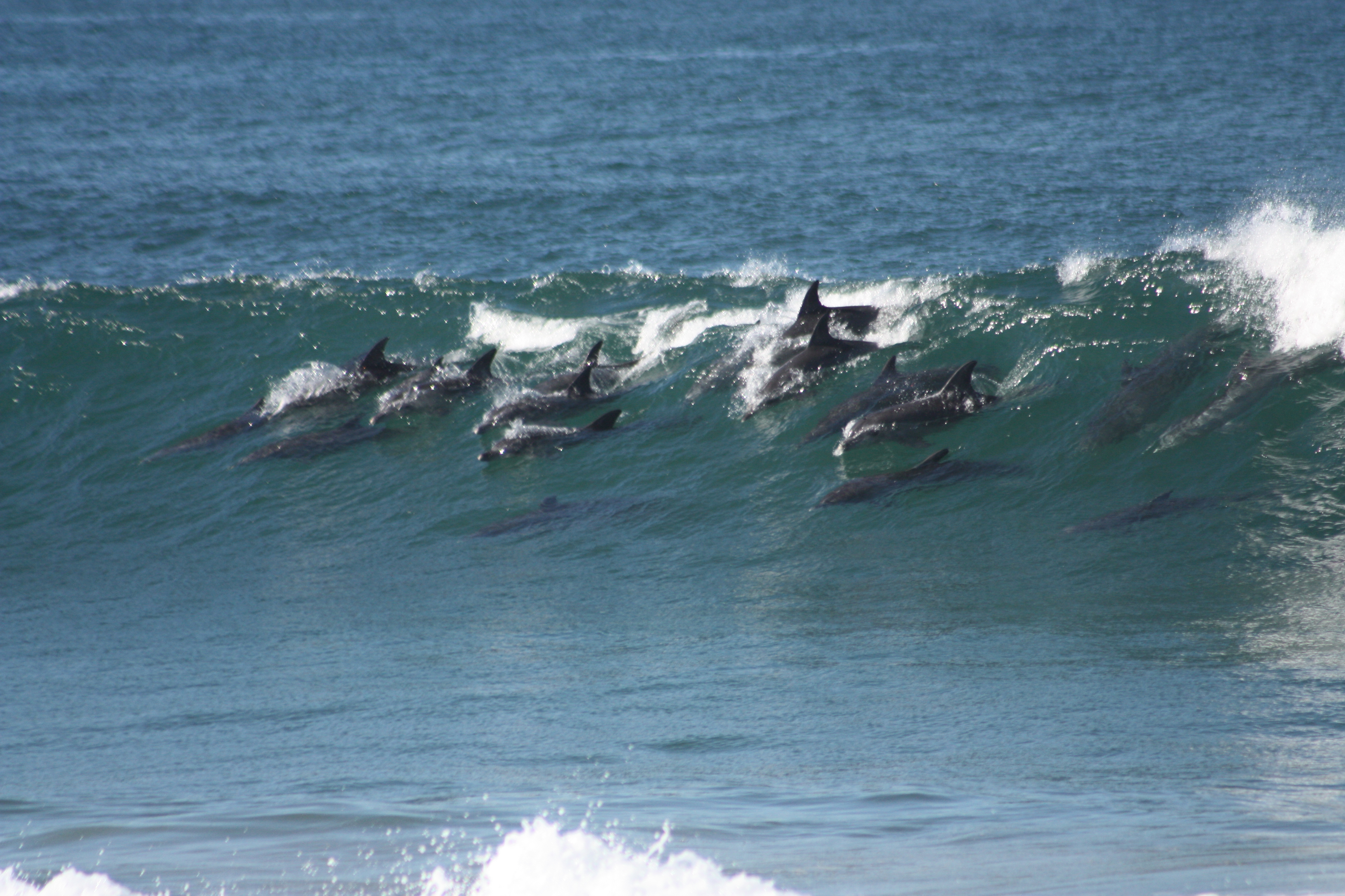 Dolphin sitings