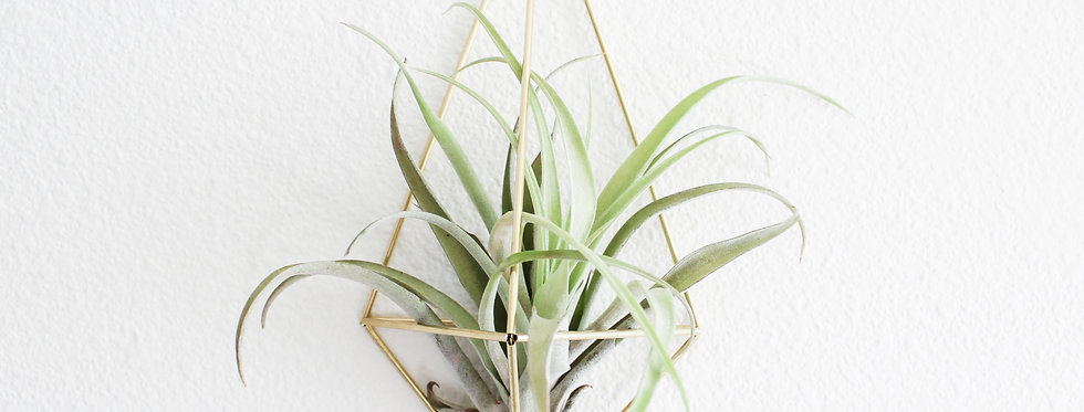 Air Plant Wall Sconce