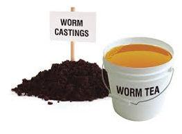 worm castings.jpe