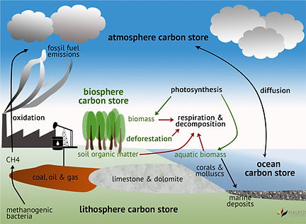 philpot carbon cycle.jpg