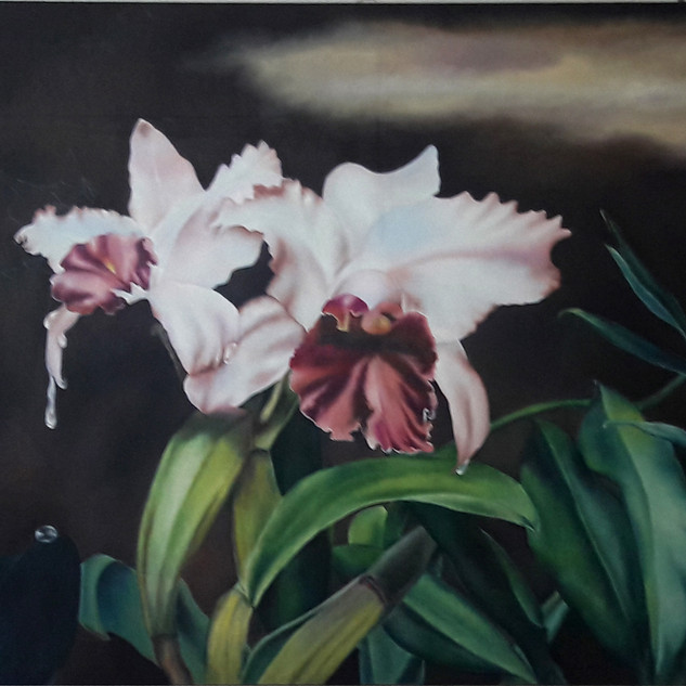 ### - Lágrima em Flor - Orquidea