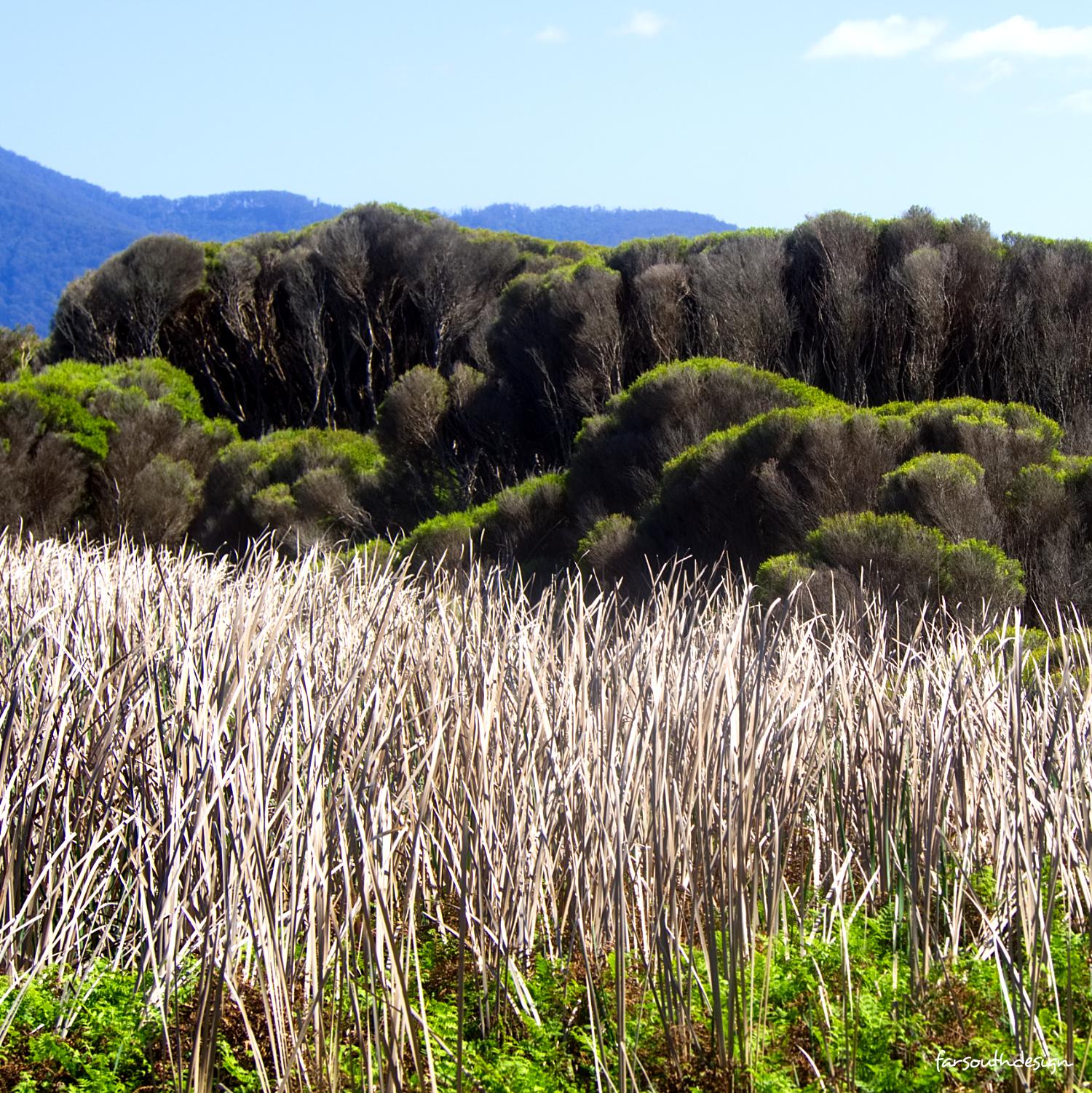 Grass & Tea Tree Textures